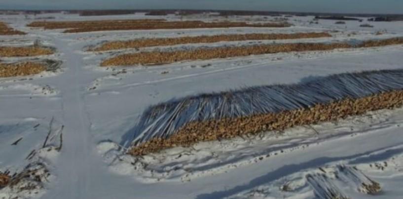 Российские экологи рассказали о масштабах и последствиях вырубки леса в Сибири
