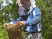На юге России вымирают пчелы из-за отравления пестицидами