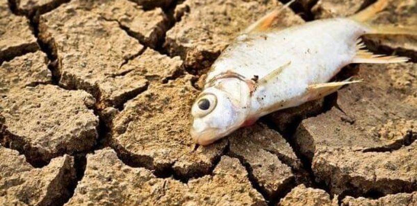 Американские ученые предупреждают о возможной гибели рыбы из-за климатических изменений