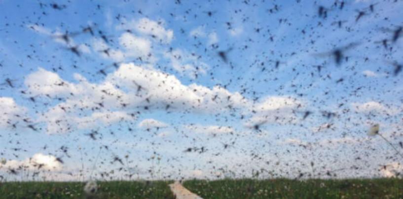 Стаи комаров атаковали Екатеринбург