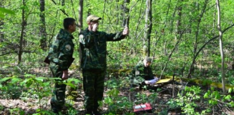 План федерализации лесоустройства
