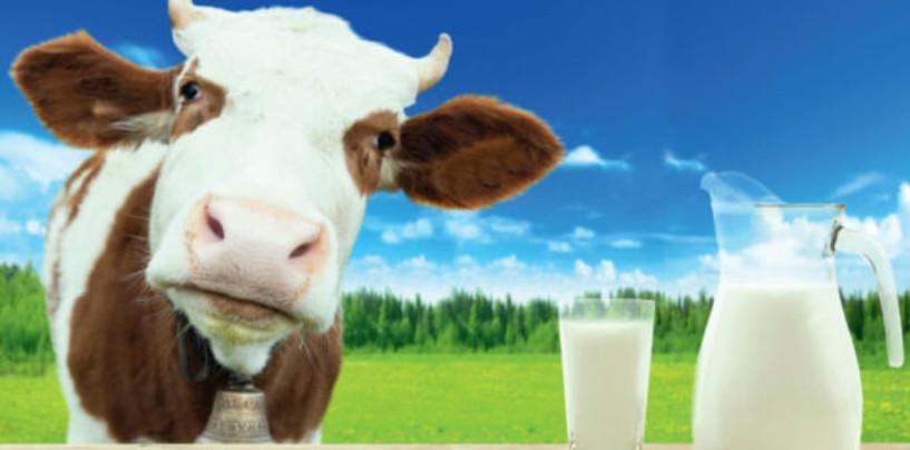 Специфика упаковки российского рынка молочной продукции