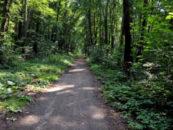 В Воронежской области запланировали восстановить 2,3 тыс га лесов к 2024 году