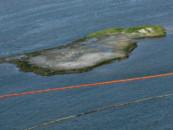В Мексиканский залив уже 14 лет непрерывно вытекает нефть. Экологи заметили это только сейчас