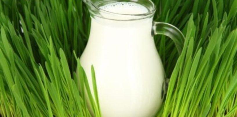 Диетологи Самары: Для здоровья полезнее всего пить молоко жирностью не более 2,5%