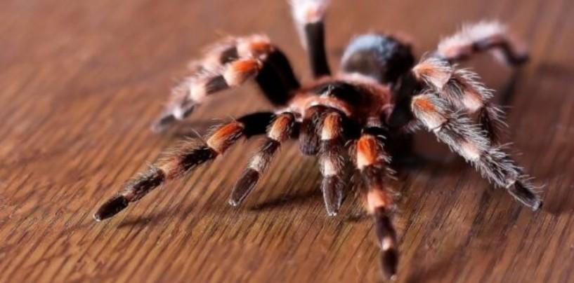 Греческий город Этолико пауки завернули в паутину