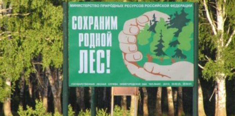 Защитить русский лес! Революционный разговор о пресечении вывоза леса в Китай из России между Матвиенко и Кобылкиным