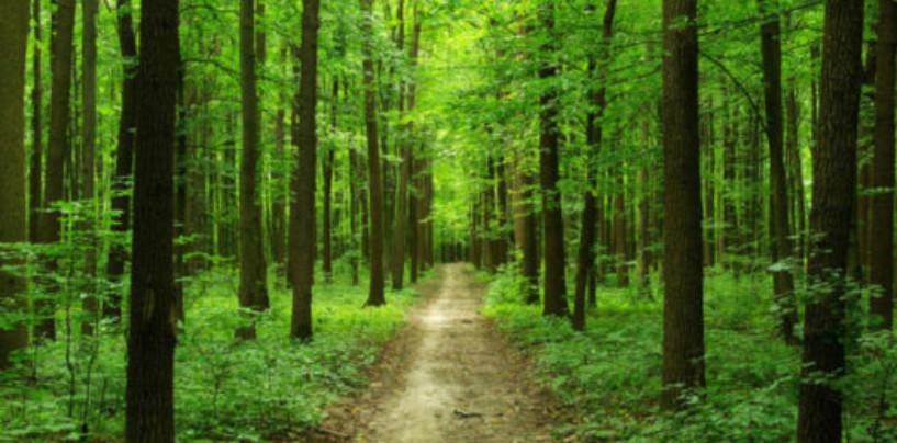 В России хотят создать госкорпорацию по управлению лесом