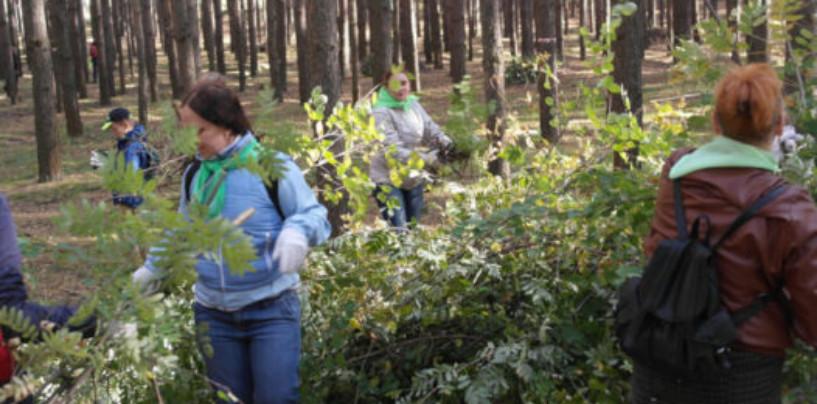 В Севастополе стартовал второй этап Всероссийской акции «Живи, лес!»