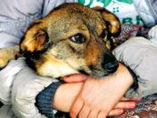 Метод ОСВВ. Чье дело в Петербурге — «собачье»