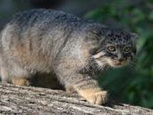 Дикие животные за 40 лет вымерли на 60 процентов