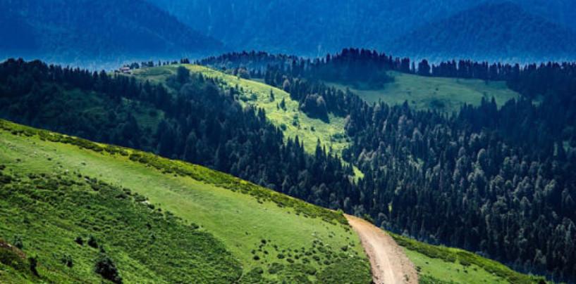 Омбудсмен по экологии рассказал, что станет с километрами дикой природы России