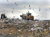 Король мусорной горы: Зачем губернатор Дрозденко превращает Ленобласть в одну большую помойку