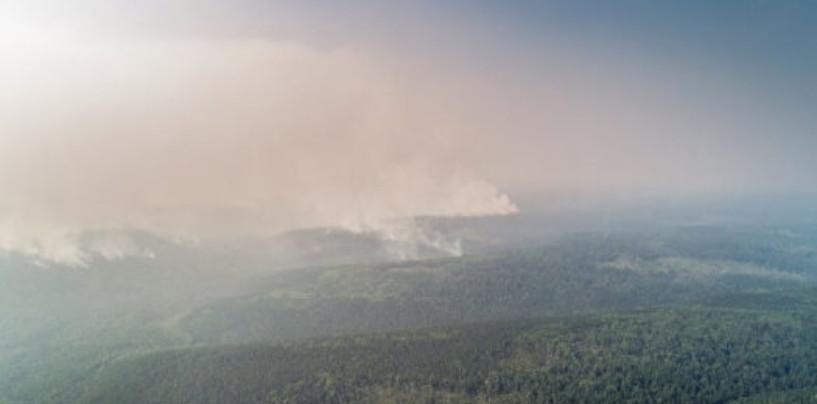 В сгоревших сибирских лесах могли пострадать и погибнуть 13 тысяч животных