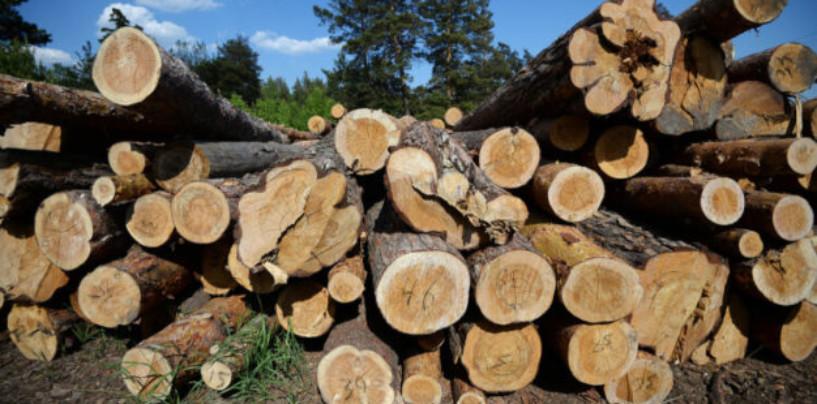 Глава Минприроды РФ заявил о возможном введении запрета на экспорт леса в КНР