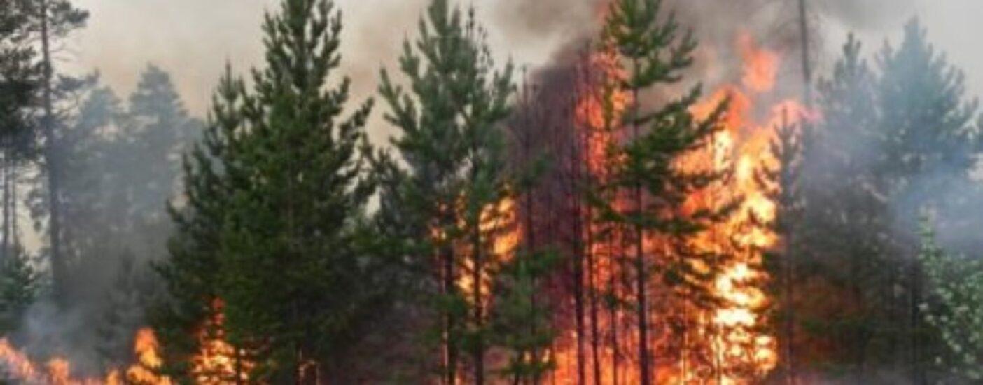 Научные институты России подготовили предложения по борьбе с лесными пожарами