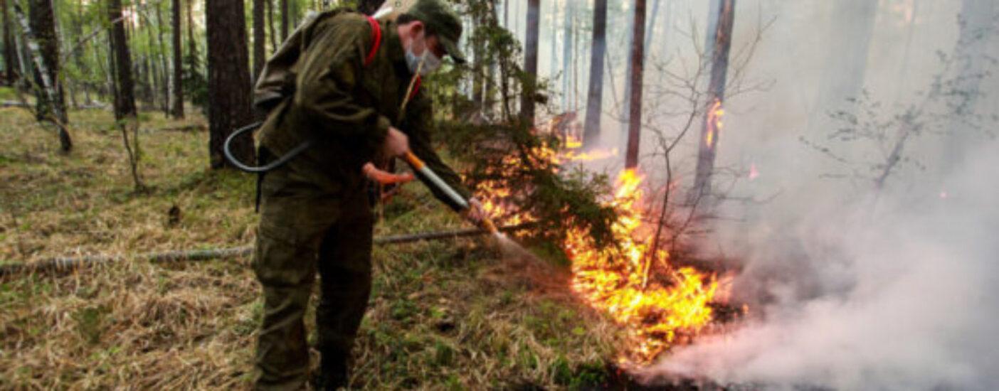 Россияне назвали вырубки и халатность властей основными причинами пожаров